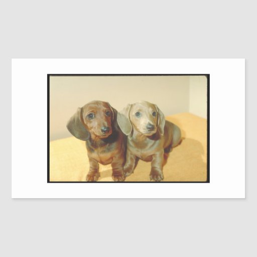 Dachshund Puppies Rectangle Stickers