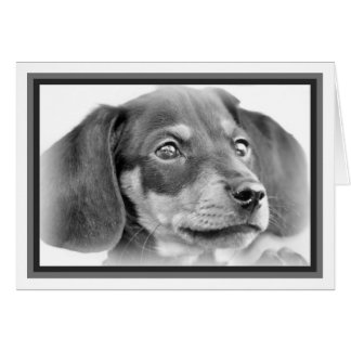 Dachshund Puppy B&W Card