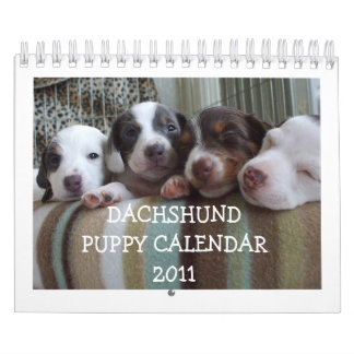 Dachshund Puppy Calendar 2011