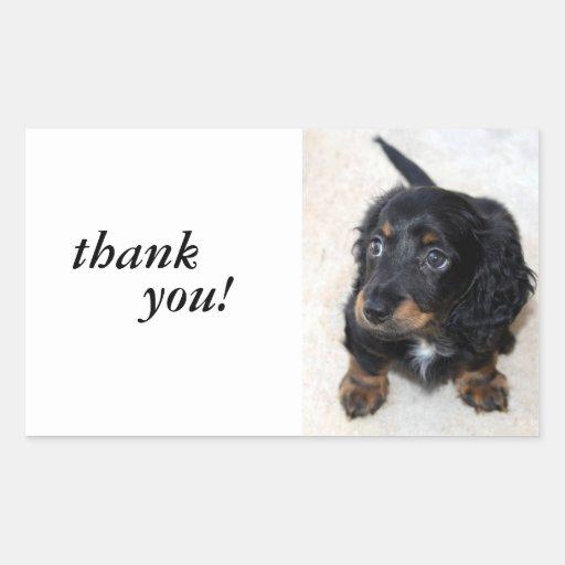 Dachshund puppy dog cute beautifil photo, gift rectangle sticker