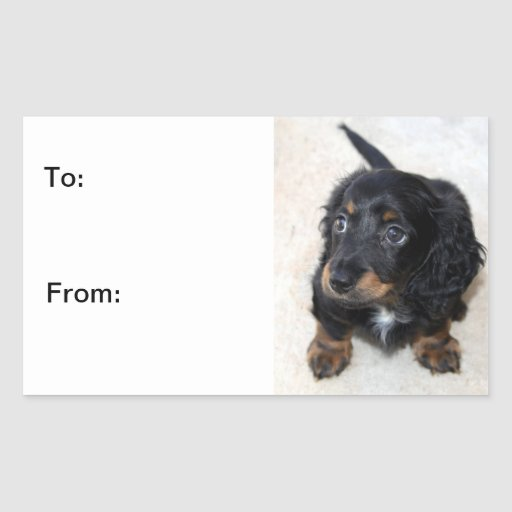 Dachshund puppy dog cute beautiful, to, from, gift stickers