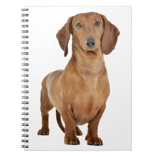 Dachshund Puppy Dog Love Spiral Notebook