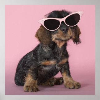 Dachshund puppy wearing sunglasses print