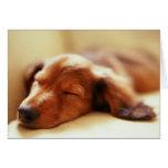Dachshund sleeping greeting card