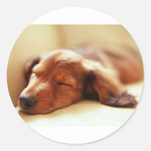 Dachshund sleeping round sticker