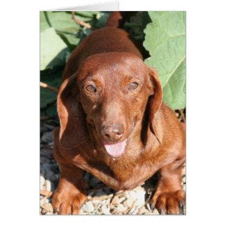 Dachshund Thinking of you Card