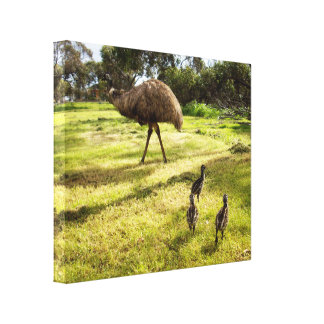 Daddy And Baby Emus Going For A Walk, Canvas Print
