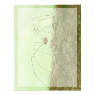 Daddy Long Legs Letterhead