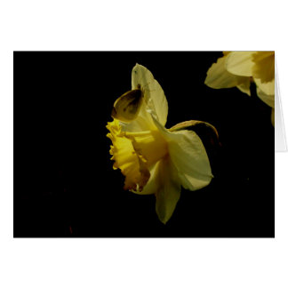 Daffodil and moth notecard
