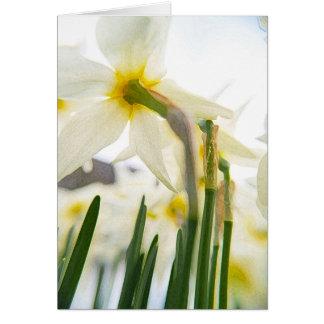 daffodil audience card