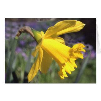 Daffodil -blank greetings card
