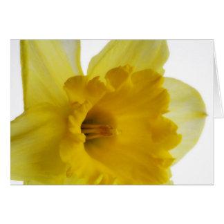 Daffodil blank greetings card
