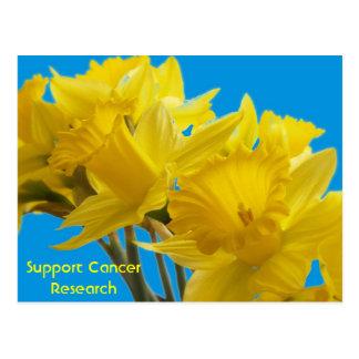 Daffodil Days Postcard