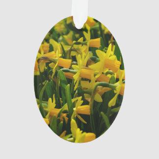 Daffodil Family