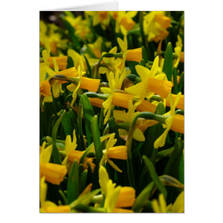Daffodil Family Card