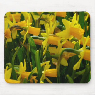 Daffodil Family Mouse Pad