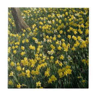 Daffodil Field Ceramic Tile