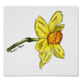 Daffodil (Narcissus) Poster