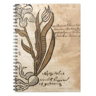 Daffodil Note Books