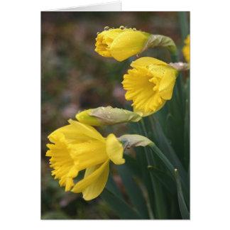 Daffodil Notecard 2