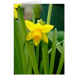 Daffodil Smile Card