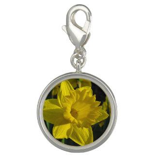 Daffodil Yellow Charm