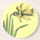 "Daffodil yellow  Old drawing of Daffodil yellow  "" Coaster"