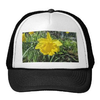 Daffodil Yellow Trucker Hat