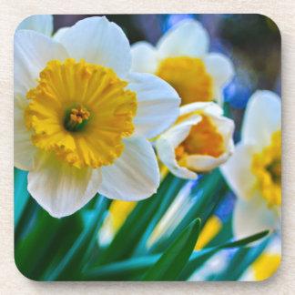 Daffodils Beverage Coaster