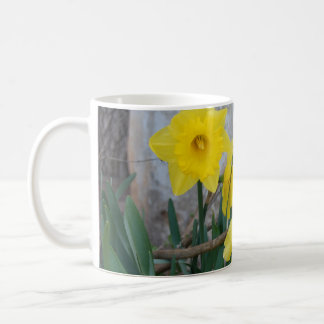 Daffodils by the Barn Classic White Coffee Mug