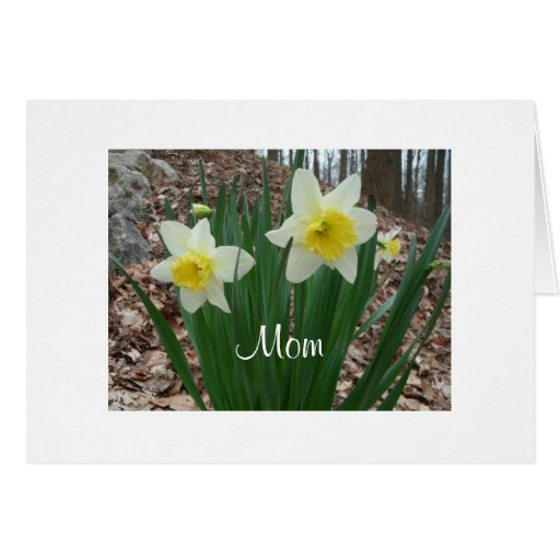 Daffodils Mothers Day Greeting Cards