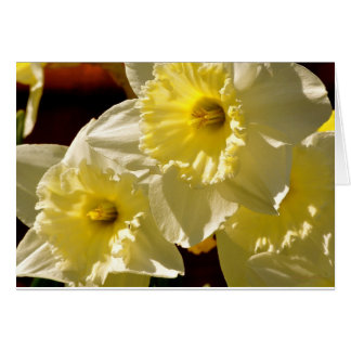 Daffodils Note Card