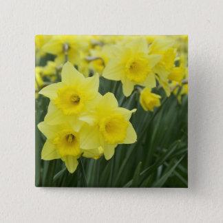 Daffodils RF) 2 Inch Square Button