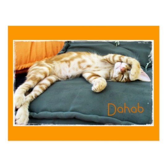 Dahab Cat Daze Postcard