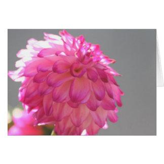 Dahlia 1 carte de vœux
