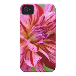 Dahlia Beauty iPhone 4 Case-Mate Case