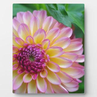 Dahlia Beauty Plaque
