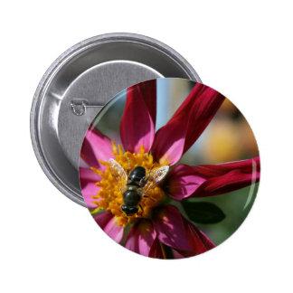 Dahlia Bee Pinback Buttons