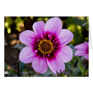 Dahlia, Bee Happy Card