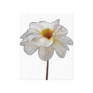 Dahlia blanc toiles