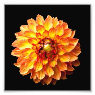 Dahlia flower print 6x6in