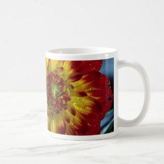 Dahlia hybride tasse à café
