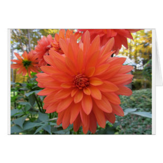 Dahlia 'Melody Swing' Card