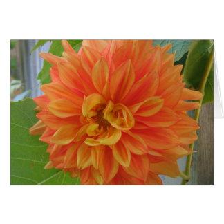 Dahlia orange carte de vœux