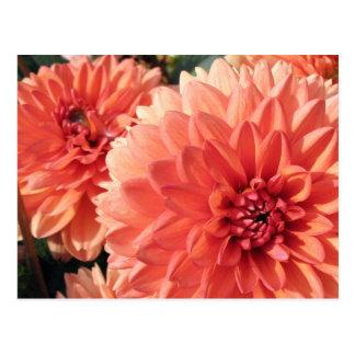 Dahlia orange de corail carte postale