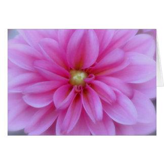 Dahlia Pink - Close Up Card