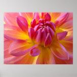 Dahlia Pink Purple Yellow Flower Art Prints Canvas