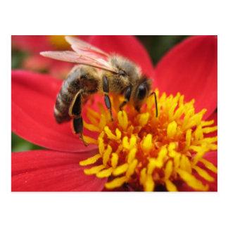 Dahlia (red) postcard
