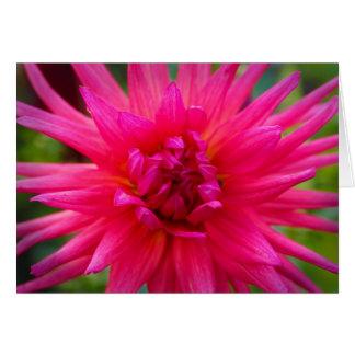 Dahlia rose cartes de vœux