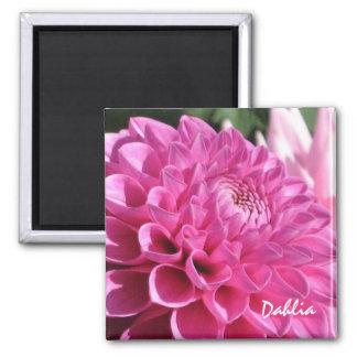 Dahlia rose magnet carré